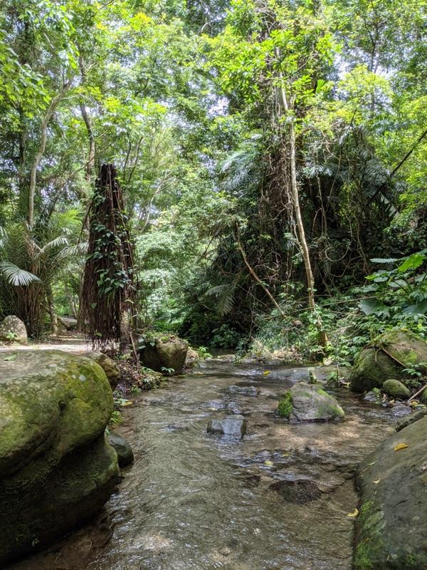 42feng05 南庄-四十二份湧泉自然生態步道 清爽宜人小秘境