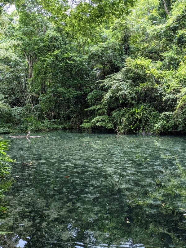 42feng11 南庄-四十二份湧泉自然生態步道 清爽宜人小秘境