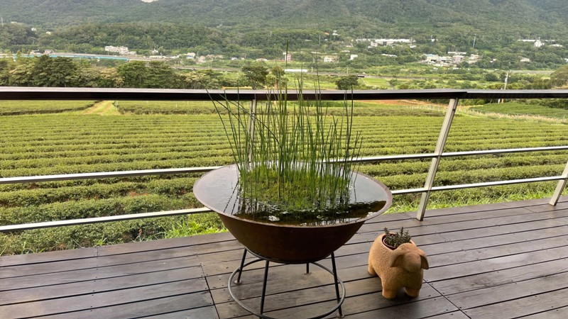 tongluoteafactory24 銅鑼-銅鑼茶廠 日式茶廠 山景茶園滿是緑意