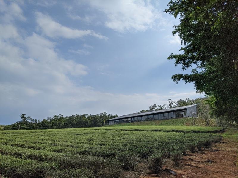 tongluoteafactory35 銅鑼-銅鑼茶廠 日式茶廠 山景茶園滿是緑意